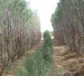 Environment News - Arava Desert - Israel