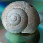 Snail 150x150 Israels Secret Project: Super Battery To Reduce Worlds Oil Thirst