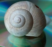 Snail - Technology News - Israel