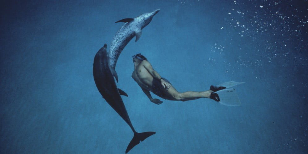 dancing-dolphins-small