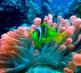 Sea Anemone - Environment News - Israel