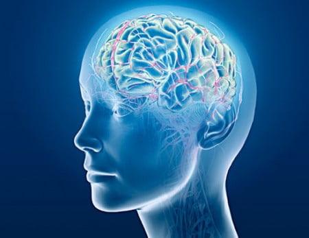 Brain via digitalbob8/Flickr