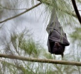 Bat - Environment News - Israel