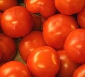 Tomato - Environment News - Israel