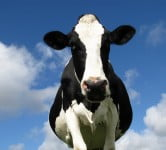 Environment News: Israeli Largest Biogas Plant To Produce Electricity From Cow Manure