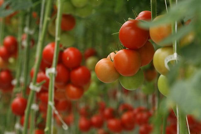 Environment News - EdenShield: Making Crops