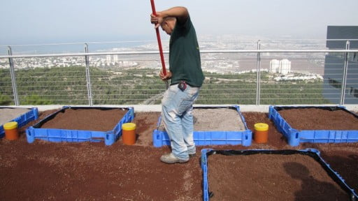Environment News: The University Of Haifa Wants To Make Roofs Greener – Literally