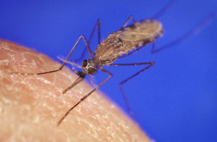 Health News: Israeli Researcher's Discovery May Lead To Malaria Vaccine