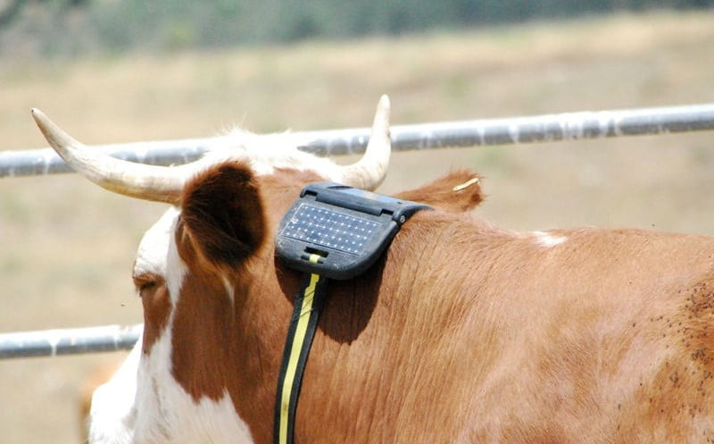 Environment News - Cattlesense: Using Satellites And AI For Cattle Herding