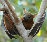 Health News: Bats Help Researchers Understand How The Brain Perceives 3D Spaces