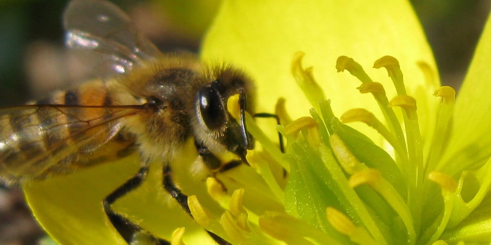 Environment News: Researchers Use Bee Hormones To Kill Pests While Protecting Bees