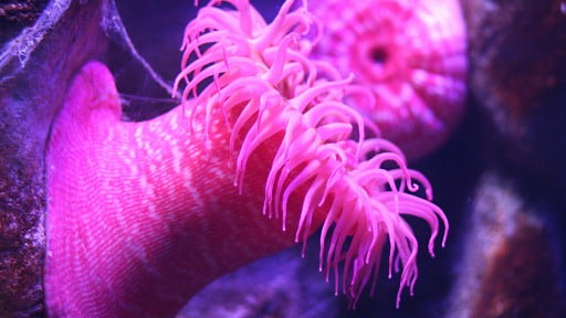 Health News: StarletDerma Uses A Poisonous Underwater Predator For Better Skin Care