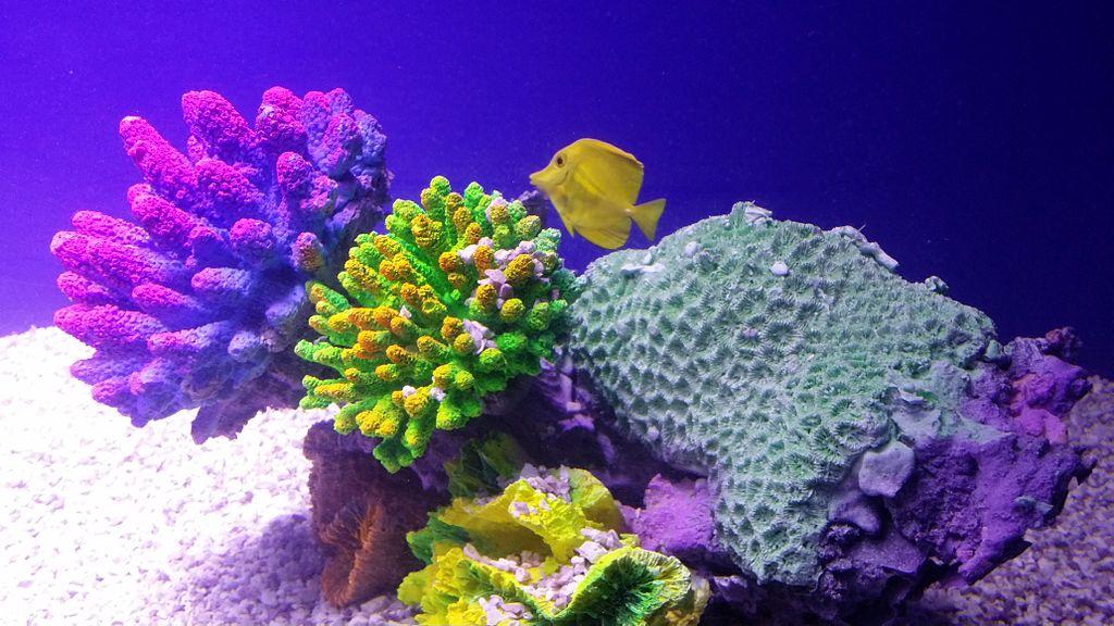 coral reefs beautiful