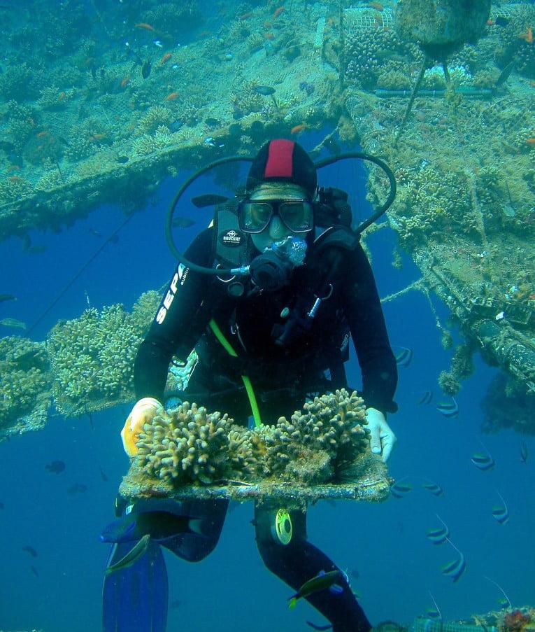 coral reef carpet