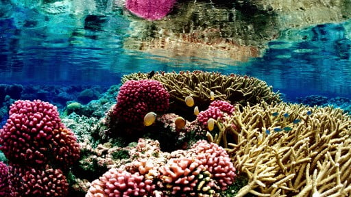 coralreefcover