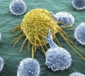 proteinattackscancercell