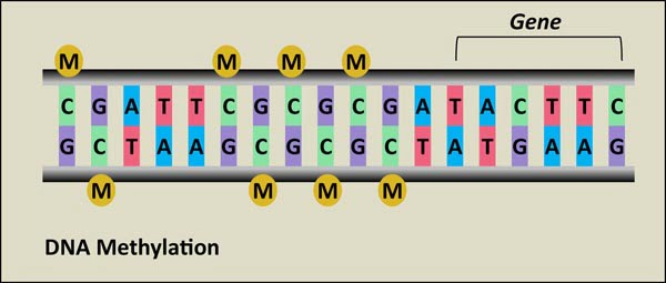 DNA methylation_small