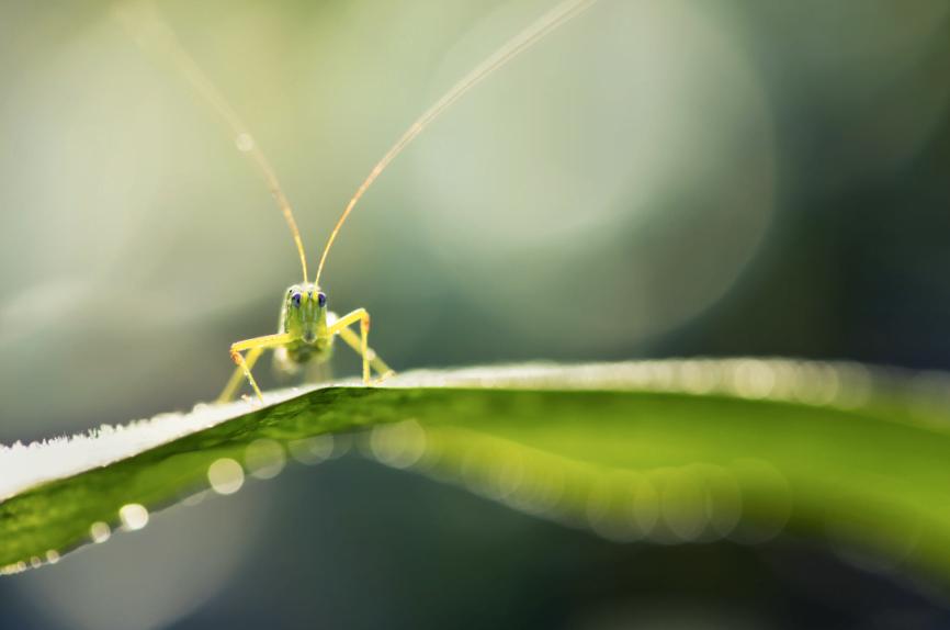 Grasshopper via Michael Beattie/Unsplash
