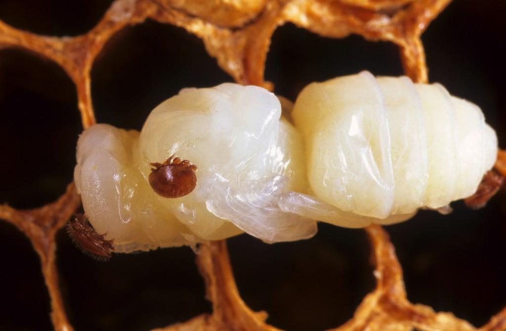beehivecloseup