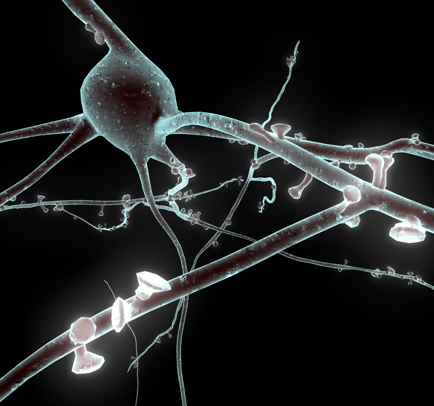 A rendering of a neuron used in the digital reconstruction of the brain via Blue Brain Project