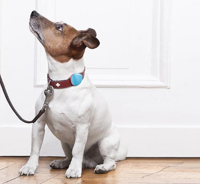 dog with hachiko sensor
