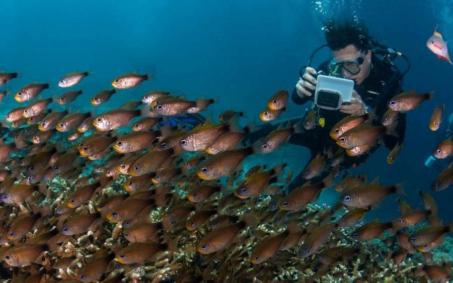 Israeli diver-photographer Noam Kortler