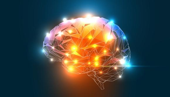 Brain,. Courtesy of Penn State
