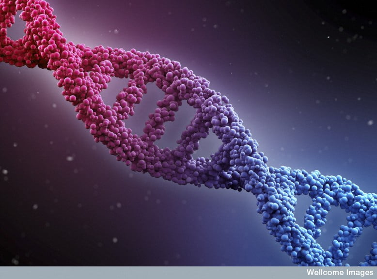 DNA double helix, illustration via Wellcome Images/Flickr