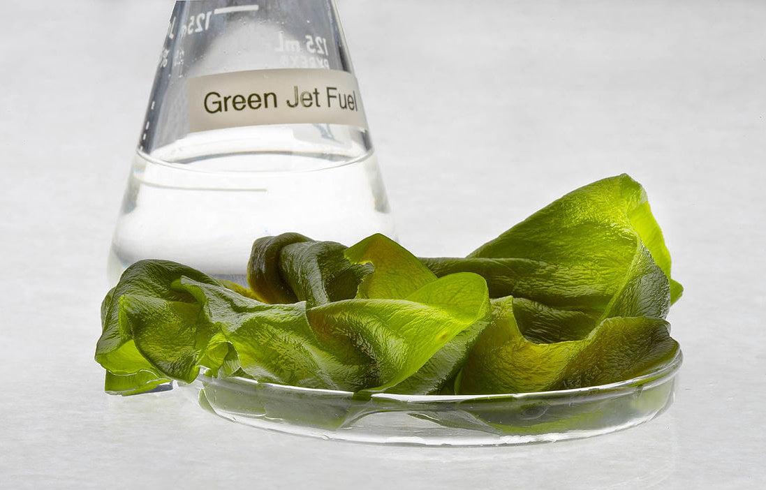 Algae Fuel in a Beaker via Eutrophication & Hypoxia/Flickr