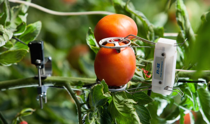 Crops Can 'Communicate' Their Needs Through Revolutionary IoT Technology Phytech