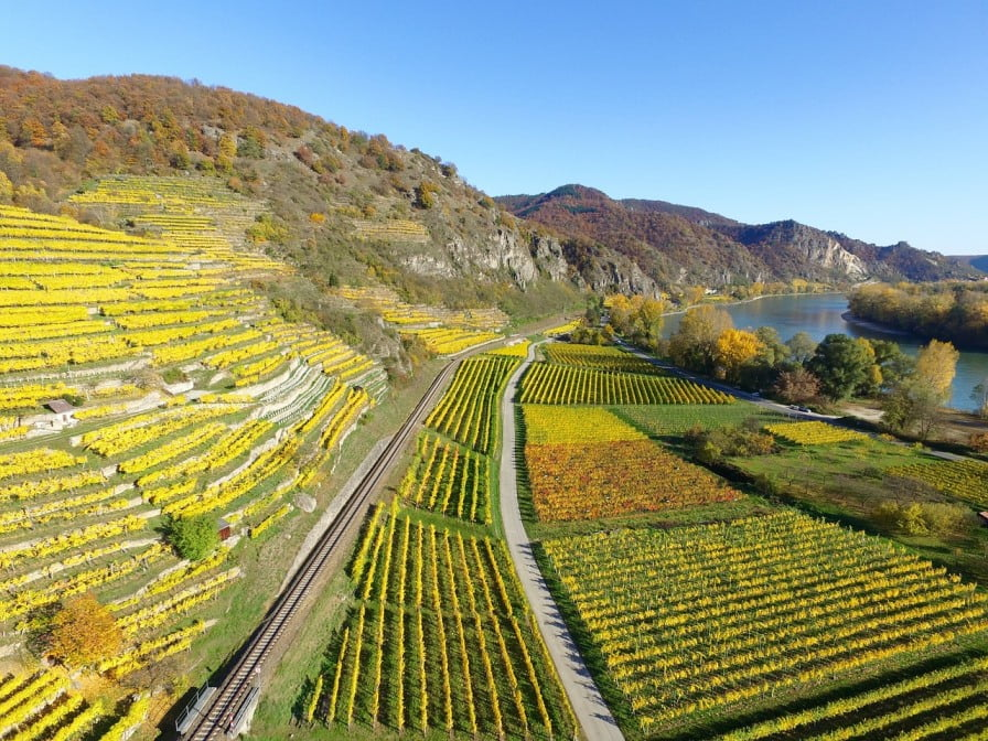 vineyards,