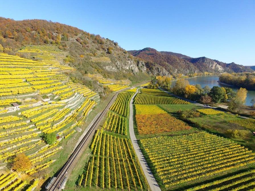 Vineyards. Courtesy