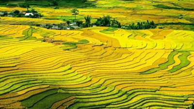 rice-terraces