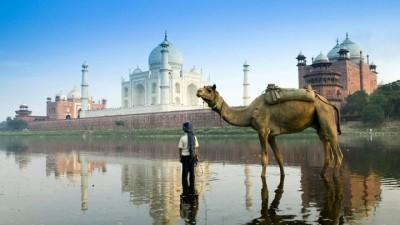taj mahal water camel