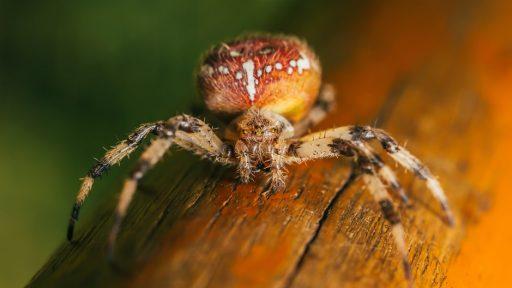 spider by alex keda
