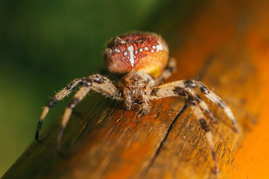 Spider. Photo by Alex Keda