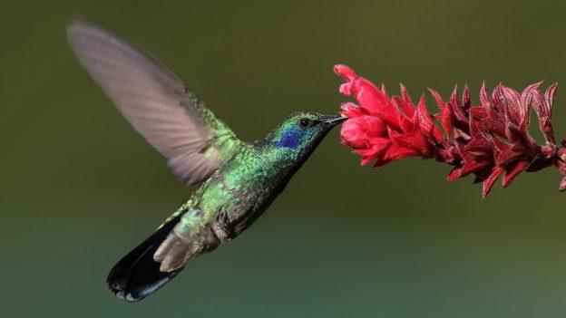 pollinating bird