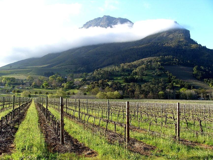 A vineyard in Stellenbosch, South Africa via Iryna Kuchma/Flickr