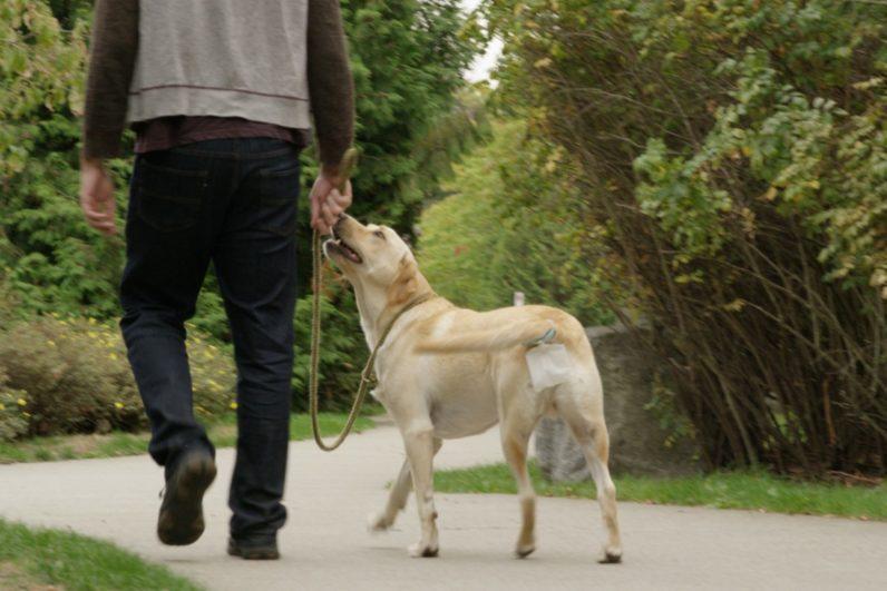 piqapoo-dog