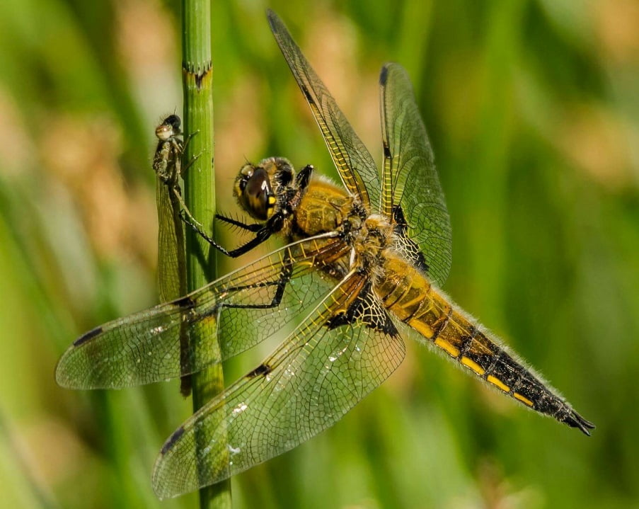Dragonfly via Michael Beattie/Unsplash