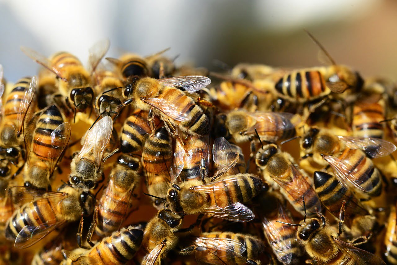 Honey Bees via Michael Beattie/Unsplash