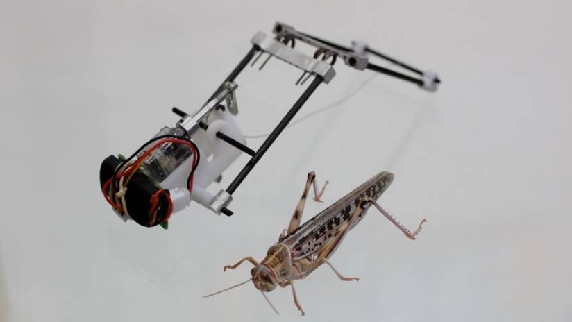 Locust Robot. Photo by Guy Hoffman