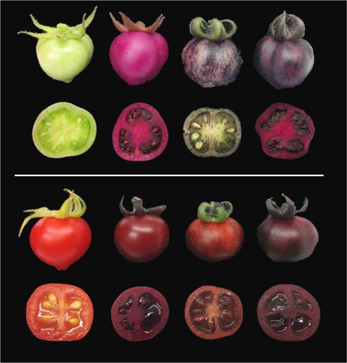 pigments betalins tomatoes