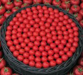 red tomatoes beautiful