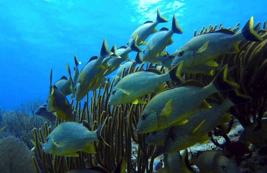 fish swarming underwater via Pixabay