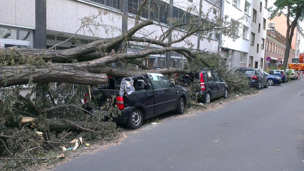 fallen-tree, tree falls on car (Pixabay)