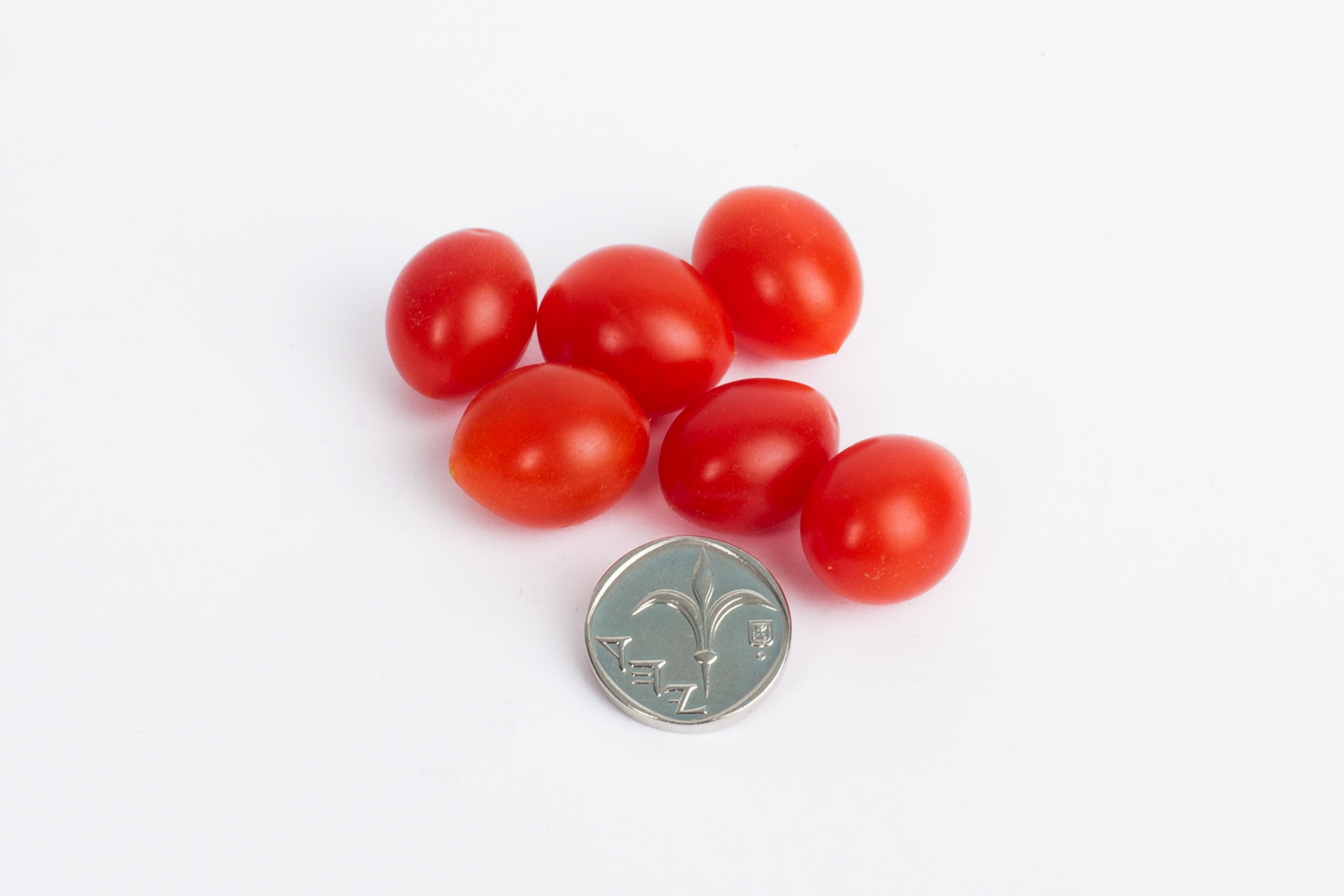 The drop tomato is smaller than a one shekel coin. Courtesy.
