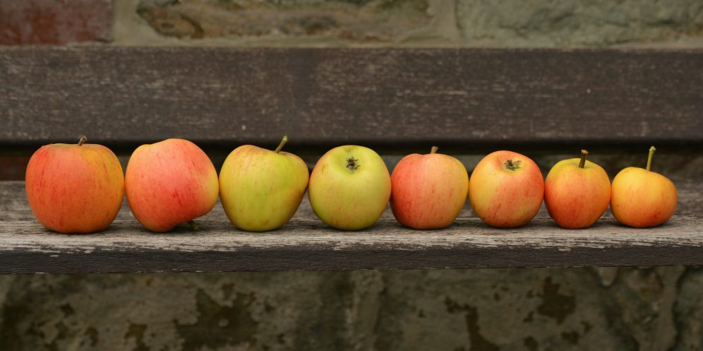 An illustrative photo of apples. Photo by Pexels