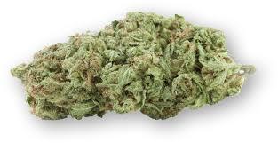 A photo of Tikun Olam's Avidekel cannabis strain which was used to makecannabidiol oil.Courtesy