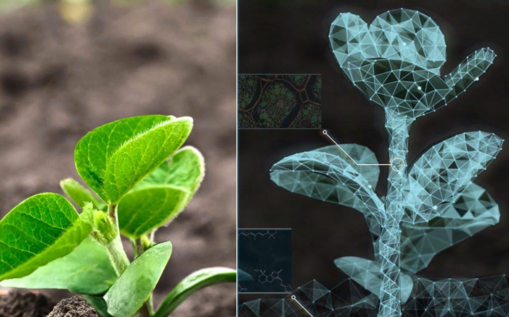 Evogene plant analytics, Screenshot